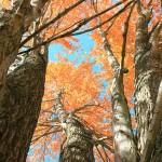 autumn-645157_1920